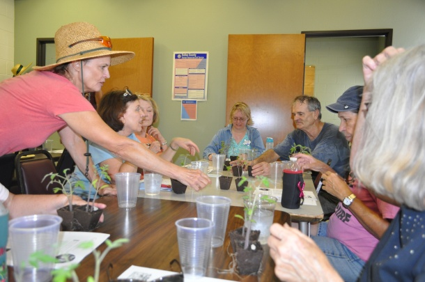 Tomato Grafting Class at The Demonstration Garden