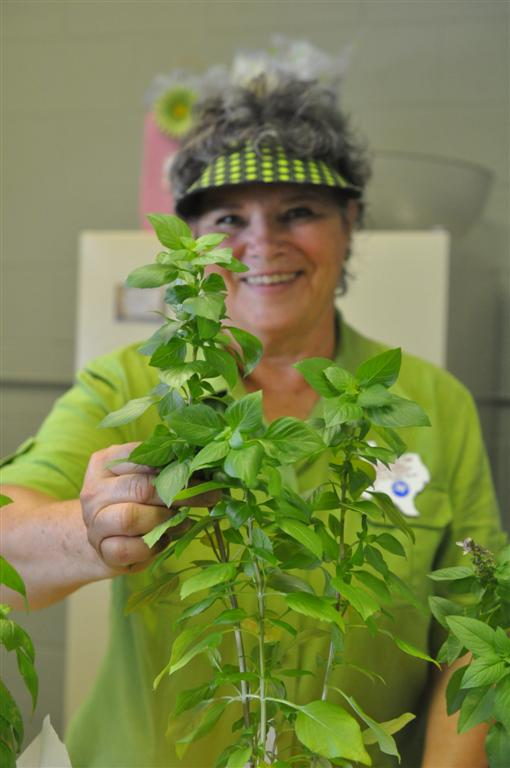 Paula the  Basil Queen Showing Where to Cut Basil for Harvest