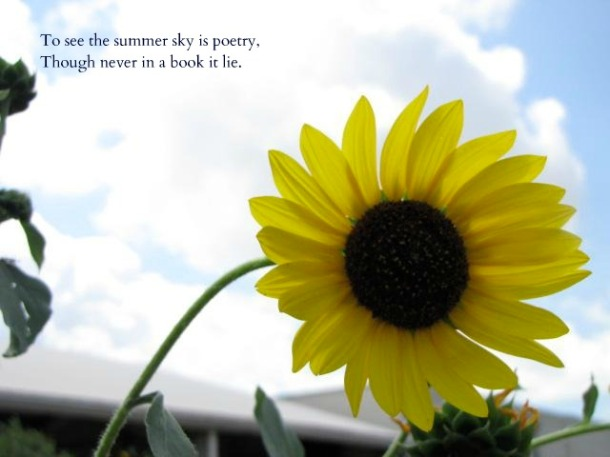 Sunflower and Sky with a quote by Emily Dickinson