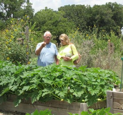looking at Vegetable Beds for the Dallas Fall Garden