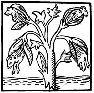 Plant Born Sheep, The Medieval Idea Of Cotton