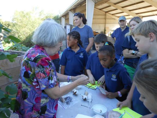 Grace Academy Students Learning About Cotton At The Demonstration Garden