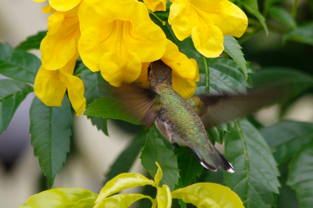 Hummingbird and Esperanza