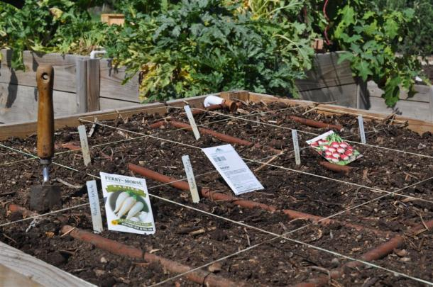 Raised Bed with carrots, radish seeds and trowel