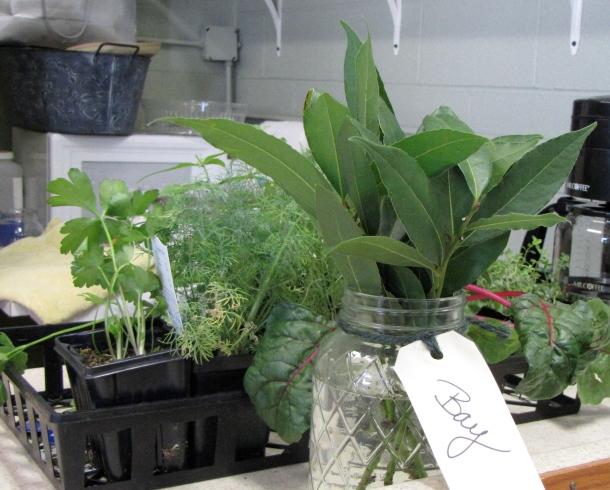 Fall Herbs For Texas Gardens