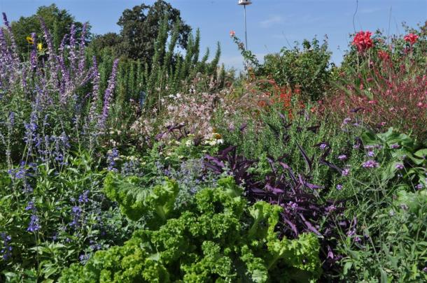 The Blues Of The Color Wheel, Salvia leucantha, Salvia farinacea, Purple Heart Next Door