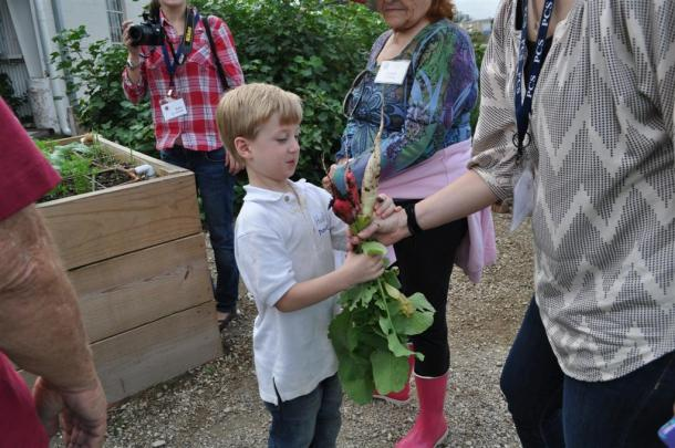 Radish Harvest For A Kindergarten Boy From Providence Christian School
