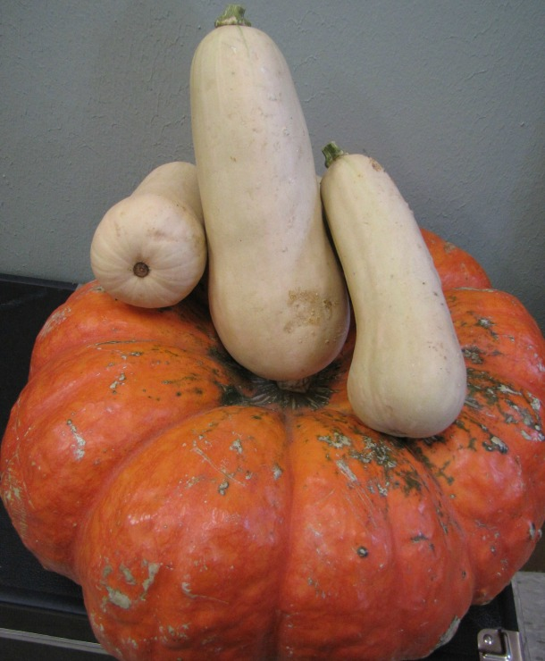 Butternut Squash Harvested From Our Garden Atop A Store Bought Pumkin