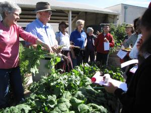 School Gardening With Jim, Abbe, Jan, Linda