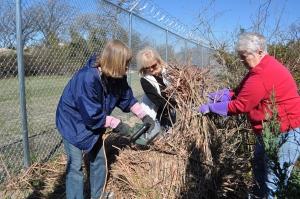 Master Gardeners Cutting Back Grass