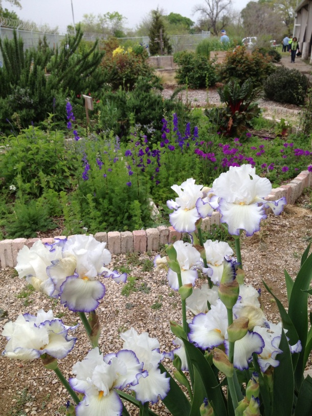 Iris, Larkspur, and Verbena