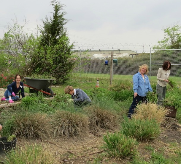 Dallas County Master Gardeners Toiling In Our Rain Garden on Joe Field Road