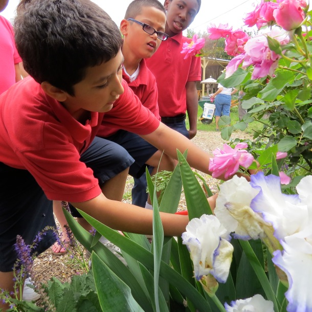 West Dallas Community School Boys Visiting The Demonstration Garden