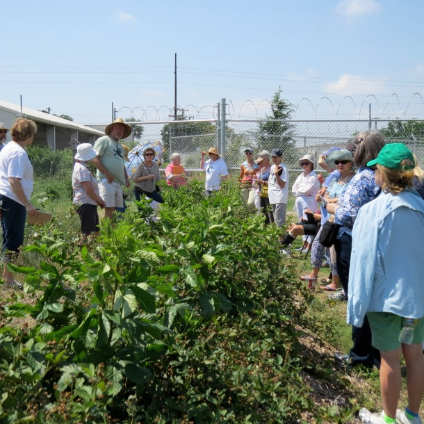 Blackberry Class in our Blackberry Patch at Demonstration Garden