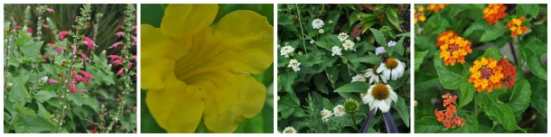 Spike, Tubular, Ray, Umbel Flower Types, Dallas Garden Buzz