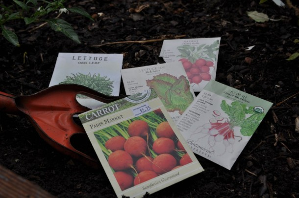 Seeds for Fall Planting in Dallas Gardens