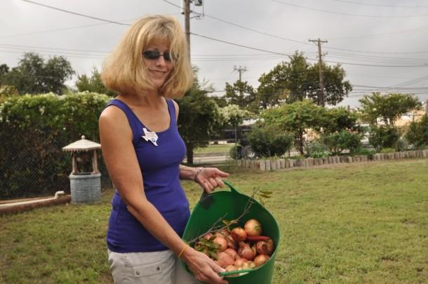 Master Gardener holding a bucket of pomegranates