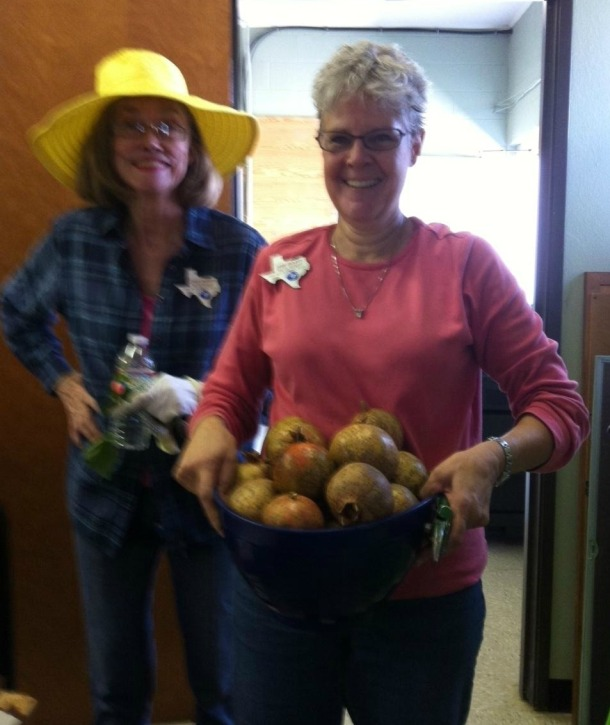 Two Master Gardeners holding a bucket of pomegranates