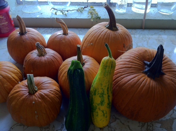 pumkins and squash on countertop