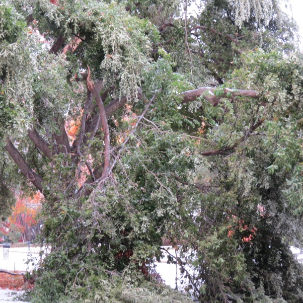 Above: Broken Tree Limbs, Ice Storm Damage