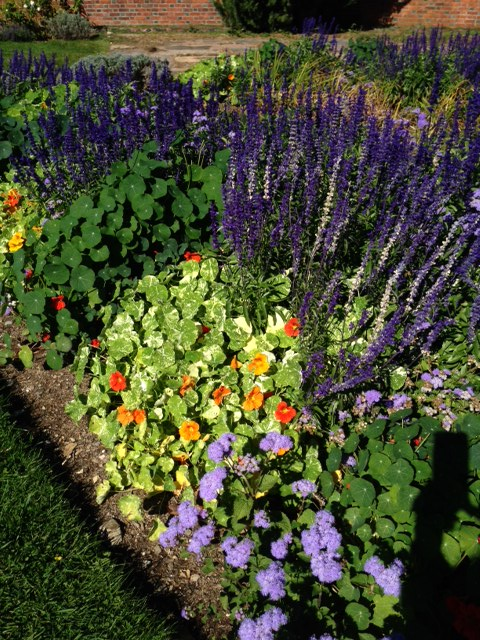 Above: Beautiful fall nasturtiums at Shelburne Farm in Vermont