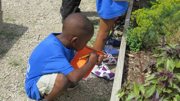Keeping a Garden Journal is introduced to our students. This future gardener is writing about herbs he has just tasted, touched, and smelled.