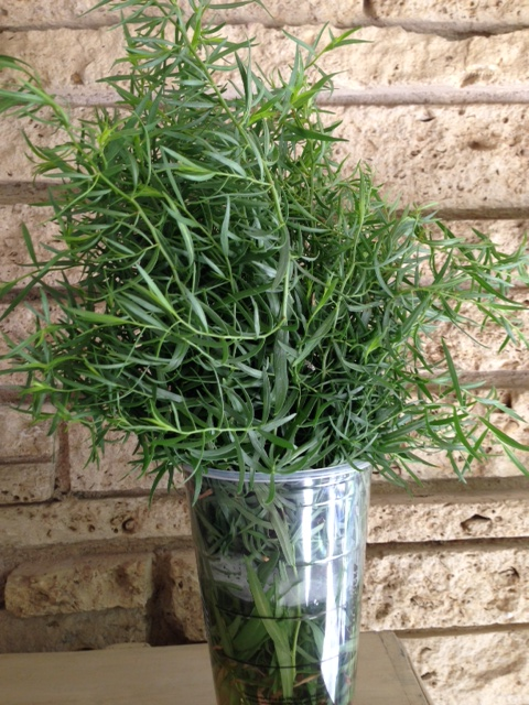 French Tarragon at the Demonstration Garden