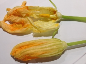 Squash blossom male with stamen
