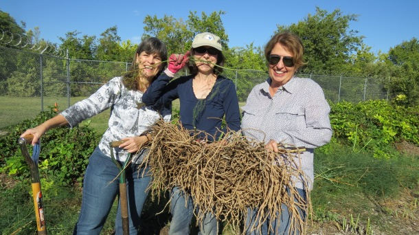 Kim, Sue, Ann, and our Saved Asparagus Roots