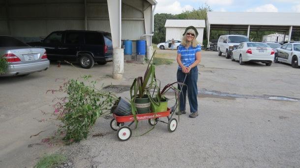 Plants Being Taken Home-Susan