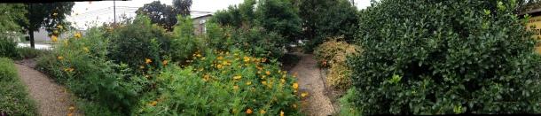 garden panoramoic -front garden