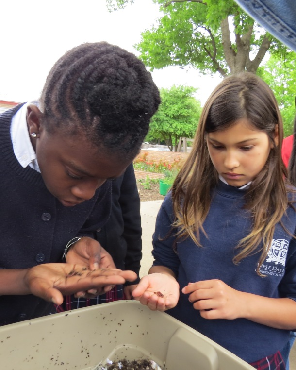 The Wonder of Worms, Nature's Composters in the Palm of Your Hand