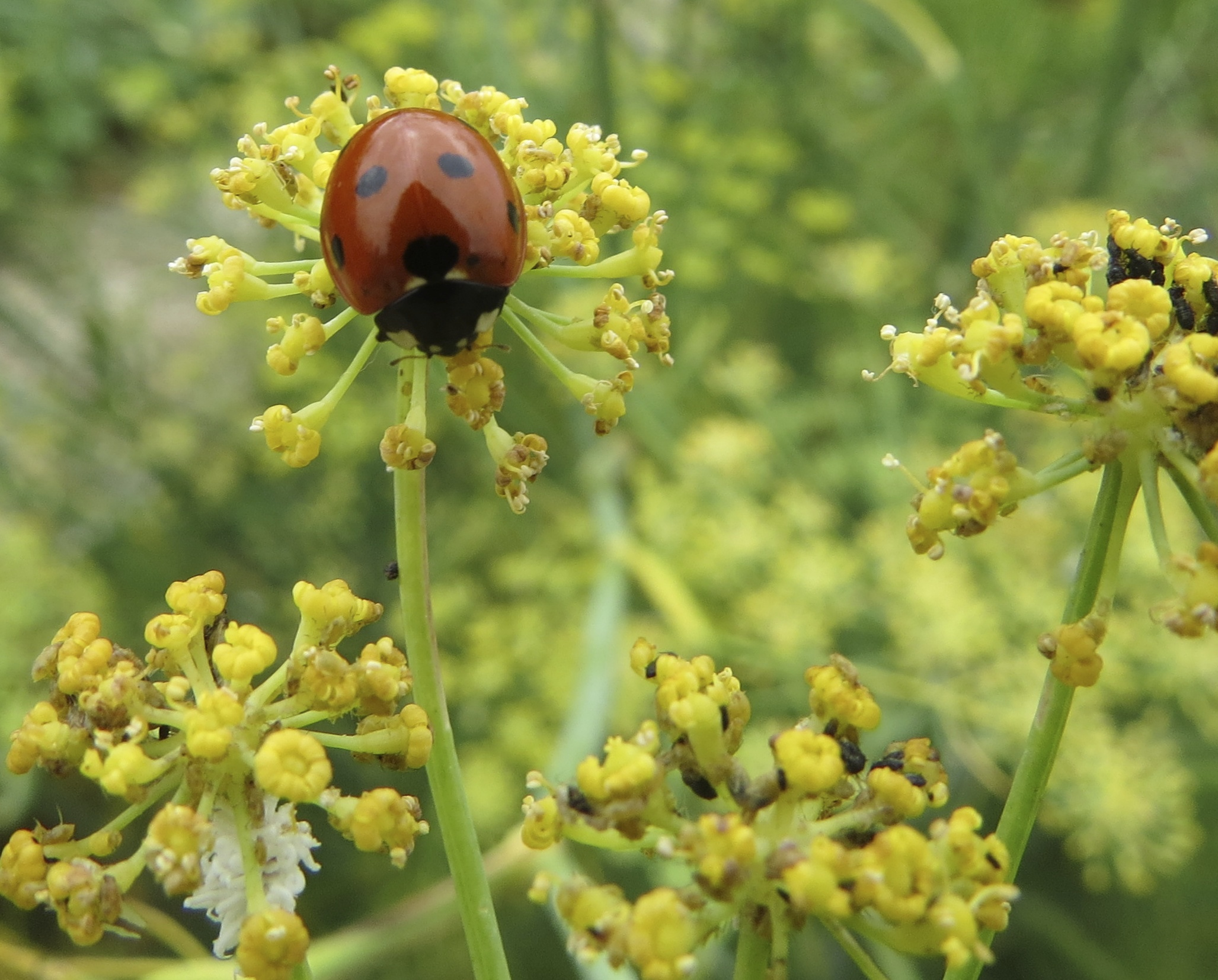 Friend or foe dallas garden buzz - What does it mean to be a master gardener ...