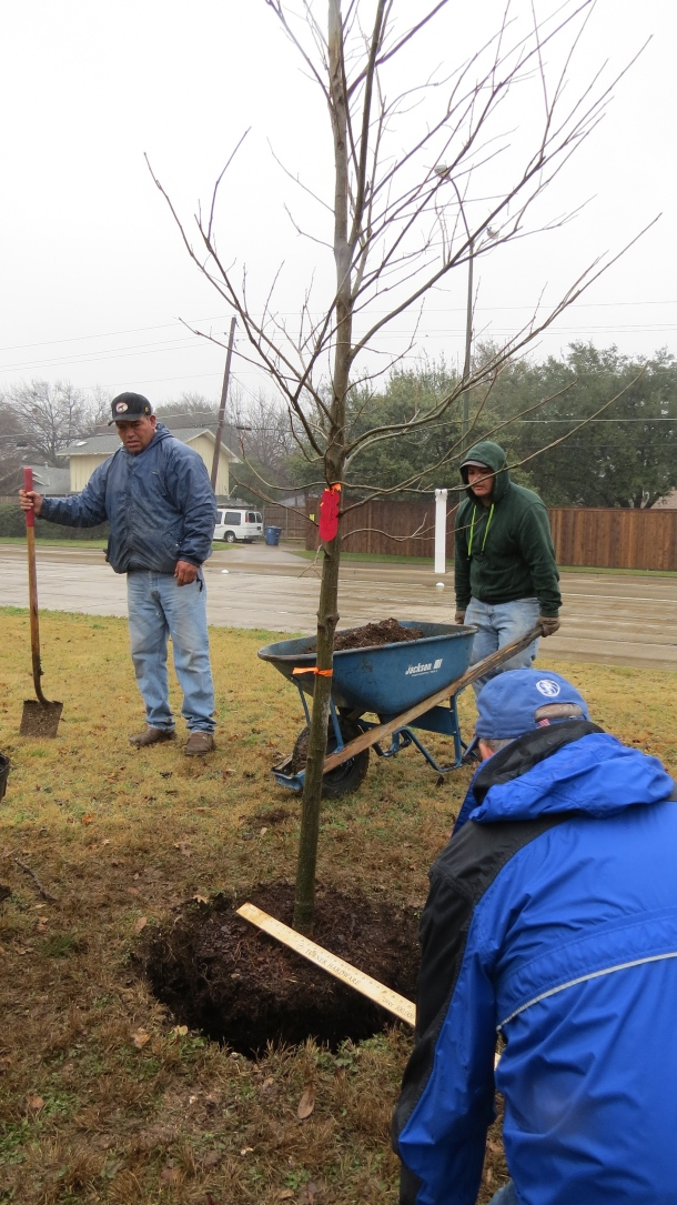 January Tree Planting
