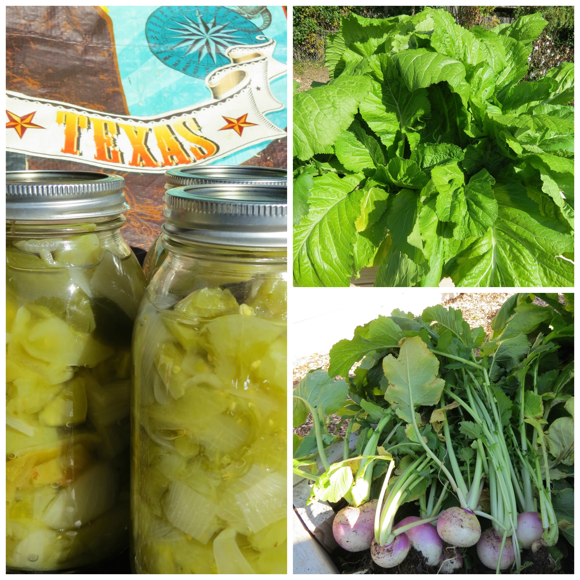 Chow Chow, Mustard Greens and Turnips