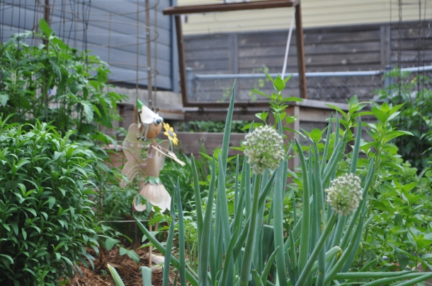 Onions, Tomatoes, Herbs, Cucumber, and Flourish in Patti's Garden