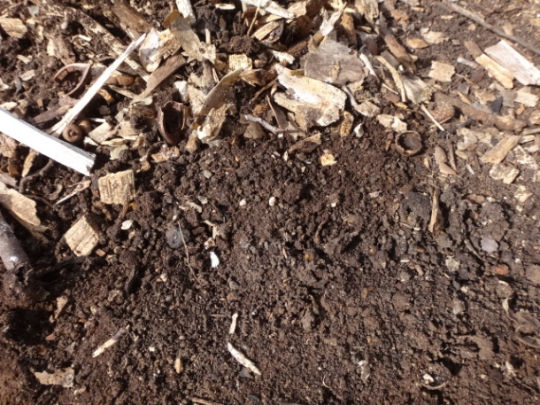 Our new soil