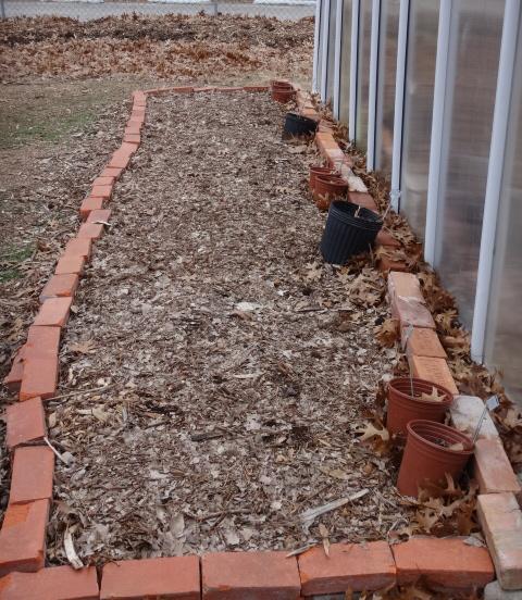 edible-garden-january