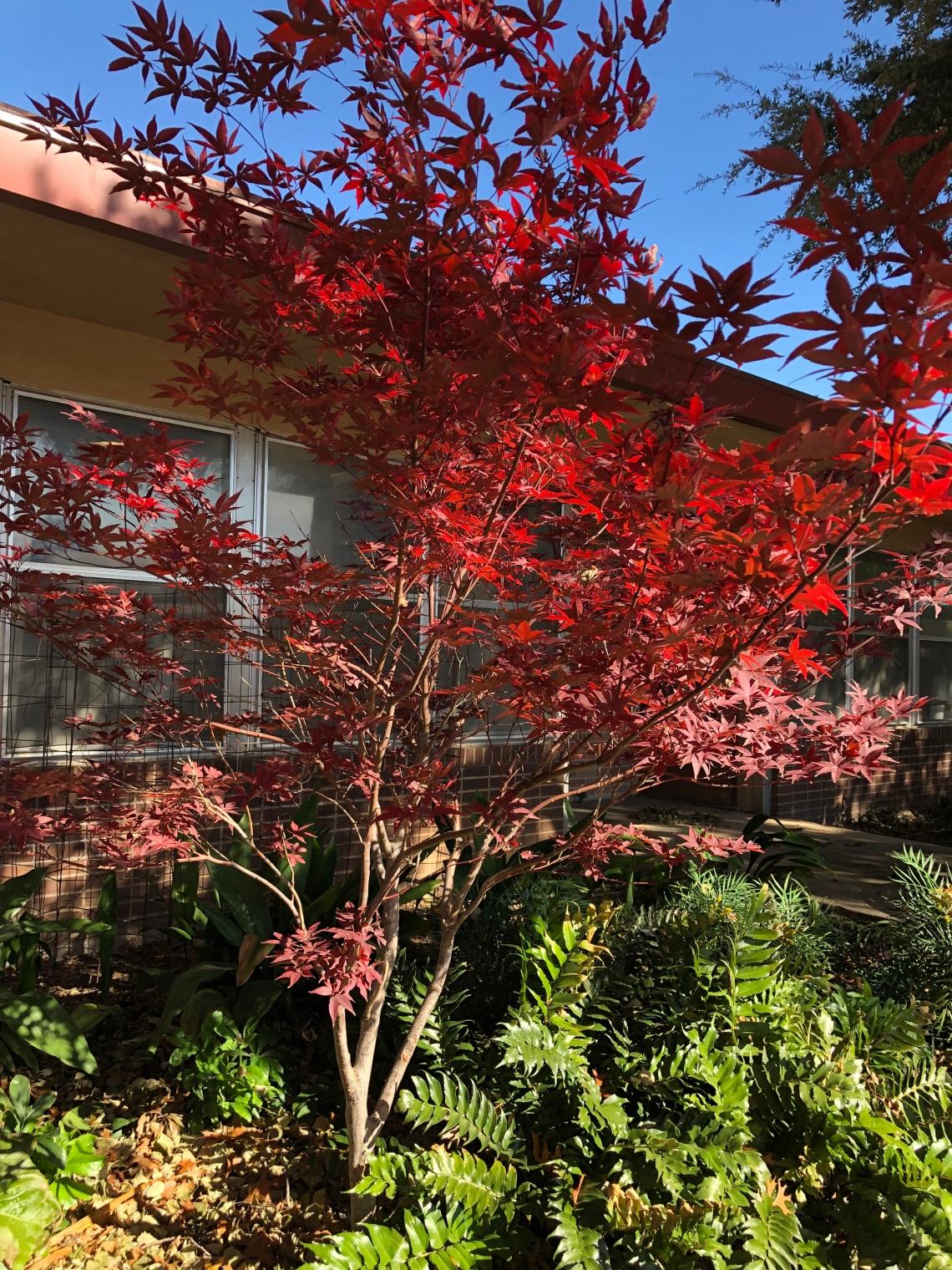 Fall Gardening In Dallas Dallas Garden Buzz